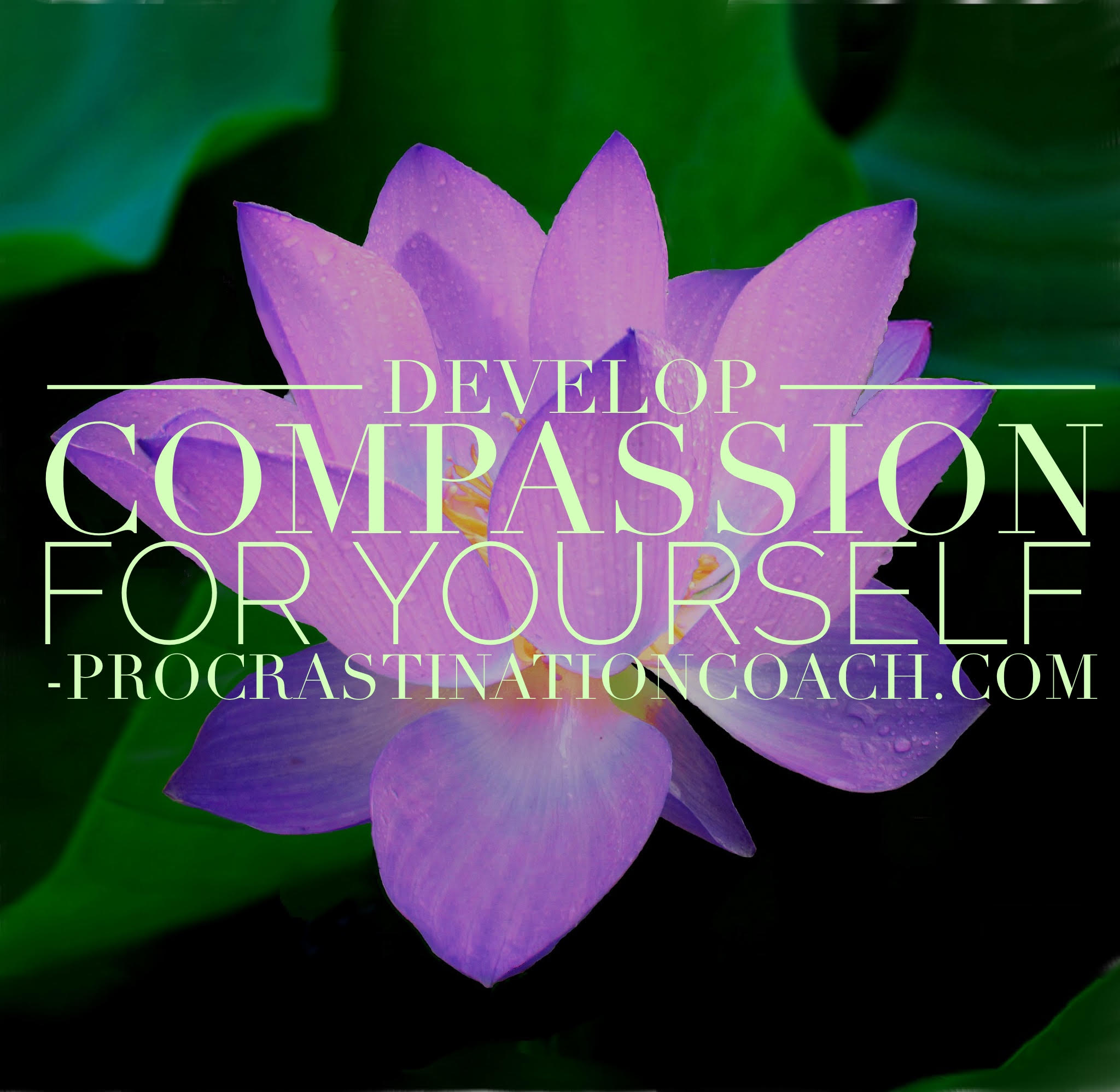 On The Importance Of Developing Compassion For Yourself Aka Life